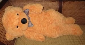 teddy8